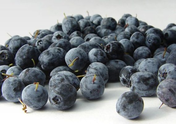 Acai Berry Para Perder Peso