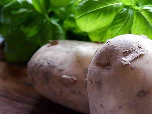 Propiedades y beneficios de la Parietaria y la Patata