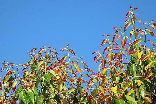 Propiedades y beneficios de la Caléndula y la Canela