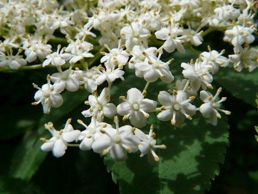 flower-8120_640
