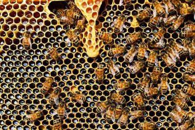 Conociendo la miel y su importancia