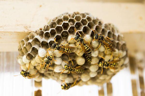 Pasado y presente de la miel