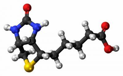 Modela de la vitamina B