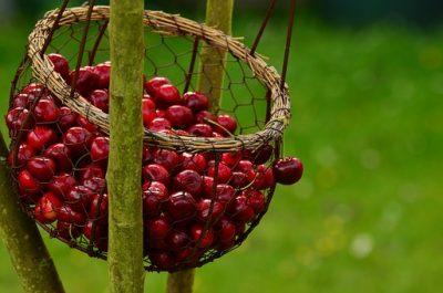 Los bioflavonoides se encuentran en las cerezas