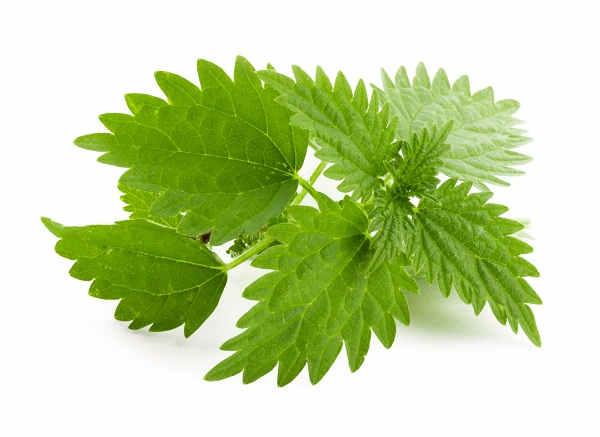 Remedios Naturales para la Gingivitis y el Dolor de Garganta