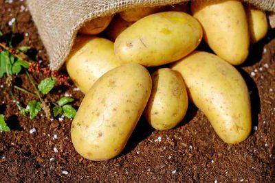 El fluor se puede encontrar en la patata