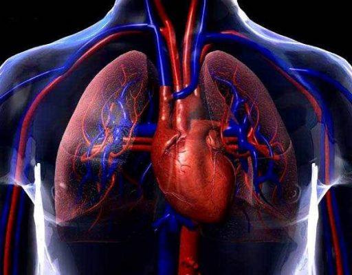 Remedios Caseros Hematopoyesis, Circulación y Clorosis