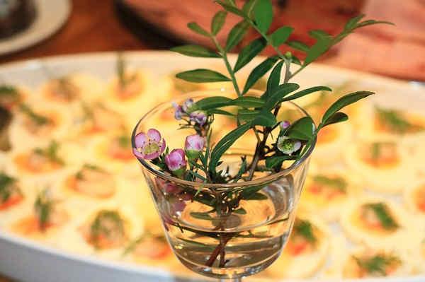 Propiedades de las plantas y esencias
