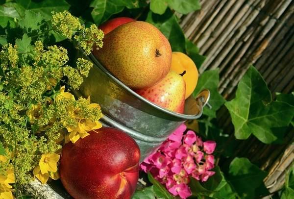 Cocción de alimentos y beneficios de las vitaminas