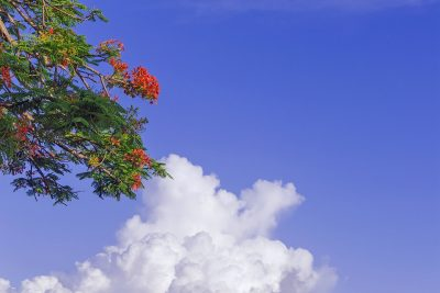 Los aries deben perfumarse con la acacia antes de dormir