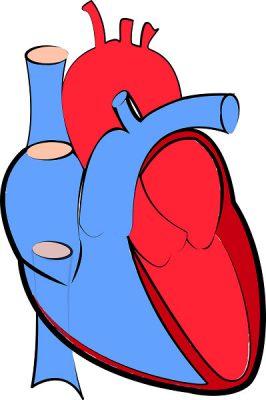 Remedios caseros para la Miocarditis