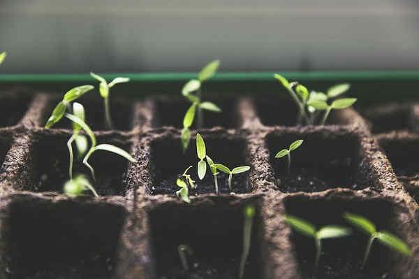Aprenda como cultivar en casa