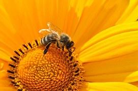 El polen es muy importante para el planeta
