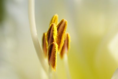 La composición del polen es muy variada
