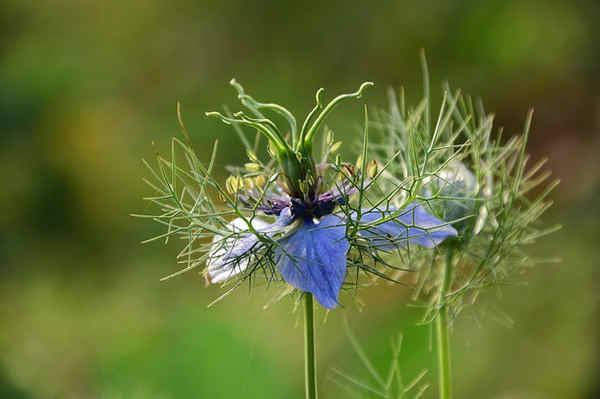 Propiedades y usos de plantas medicinales