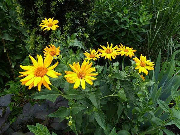 Propiedades medicinales de las plantas