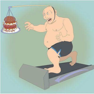 El metabolismo energético es clave para la obesidad