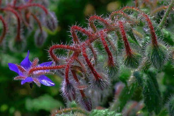Plantas medicinales para obesidad, celulitis, diabetes y enfermedades infecciosas
