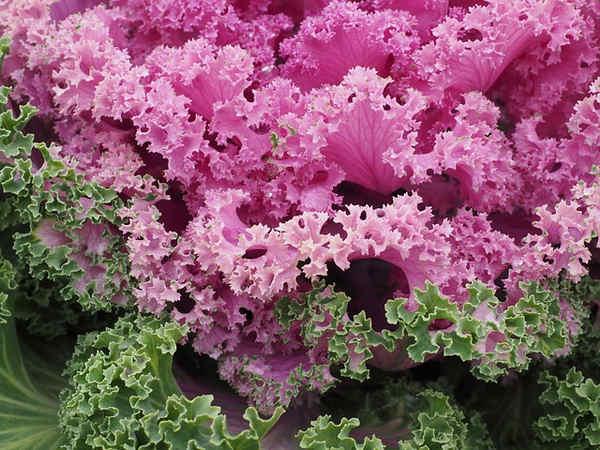 Plantas medicinales para el estomago y el aparato genital masculino