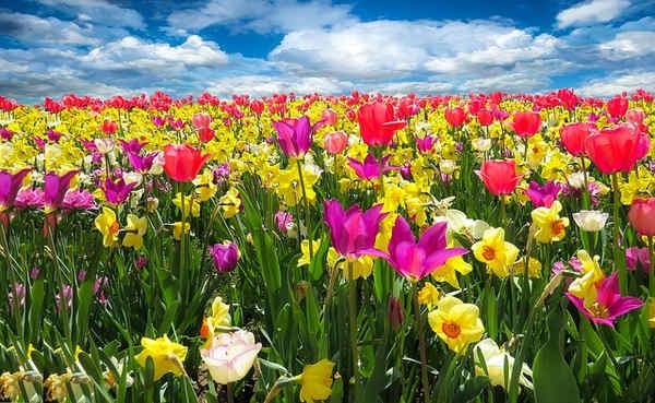 Propiedades de la primavera, pulmonaria oficinal, regalis, retama y roble comun