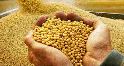 Beneficios de consumir soja